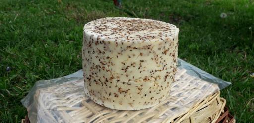 Polutvrdi kozji sir sa susamom - Susam